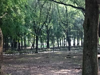 すずしげな公園1