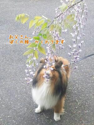 fc2_2014-05-04_20-00-19-912.jpg