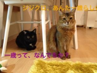 fc2blog_20140526025349a5b.jpg