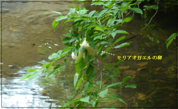 20140613215430faa.jpg