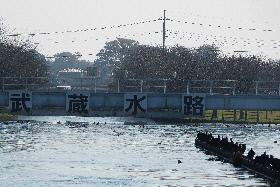 武蔵水路導水口201311②