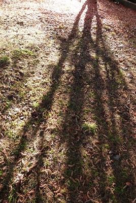 ②秋木漏れ日