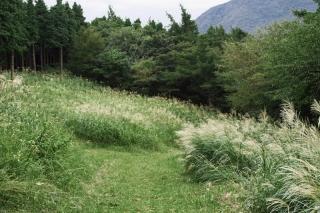 湯坂路ハイキングコース:鷹巣山付近