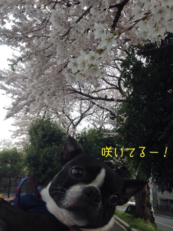 fc2blog_20140401063456434.jpg