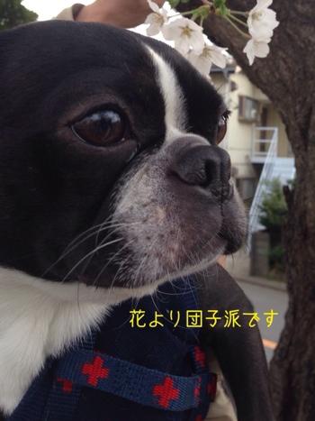 fc2blog_20140401063541208.jpg