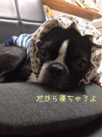 fc2blog_201405311233361bf.jpg