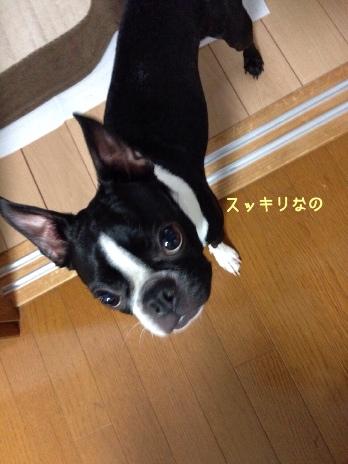 fc2blog_20140613065015627.jpg