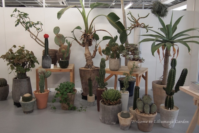 叢 喋る、響く、植物の声。 - Liliumaya Garden~花と暮らす~