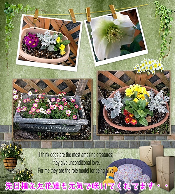 我が家の花1