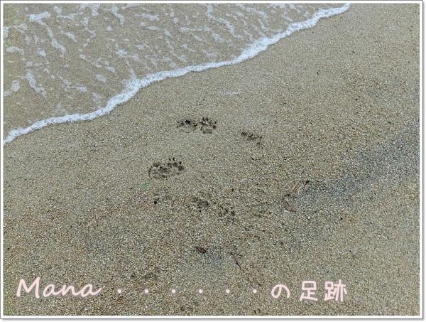 マナの足跡