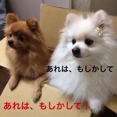 fc2blog_20140223141620afd.jpg
