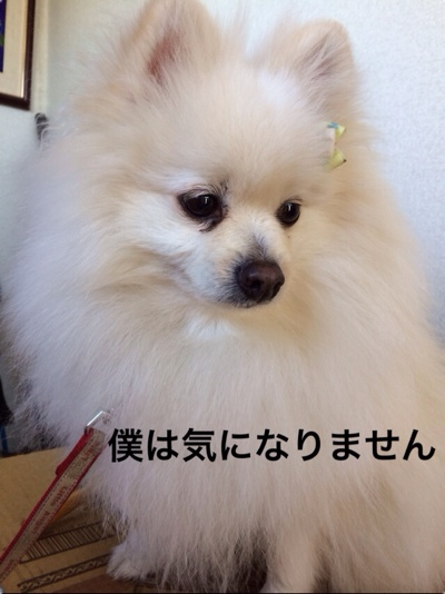 fc2blog_201402272151045e5.jpg