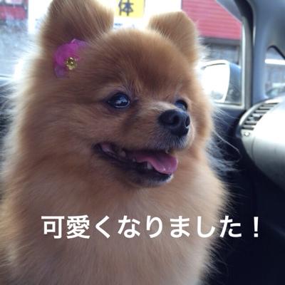 fc2blog_201403042219036e9.jpg