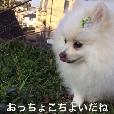 fc2blog_2014030521450235c.jpg