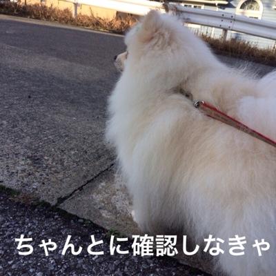 fc2blog_201403052146291e3.jpg