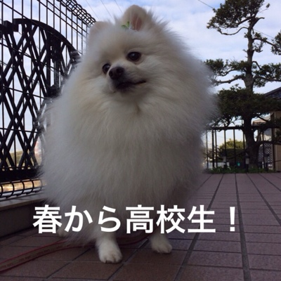 fc2blog_201403072252181ff.jpg