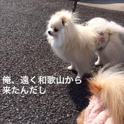 fc2blog_2014030921561775e.jpg