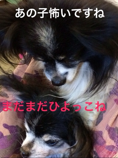 fc2blog_20140310212246fc3.jpg