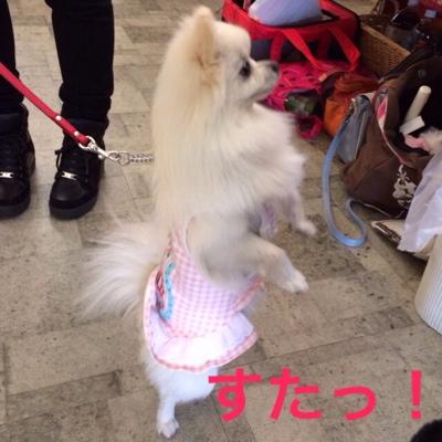 fc2blog_201403112012376fa.jpg