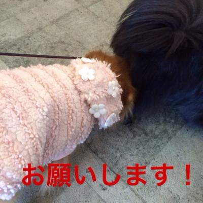 fc2blog_20140312213900bda.jpg