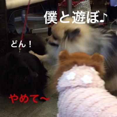 fc2blog_20140314202933aed.jpg