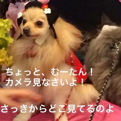 fc2blog_20140315213143959.jpg