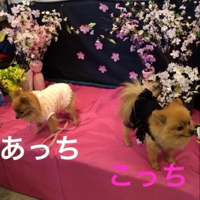 fc2blog_20140316185157bf8.jpg