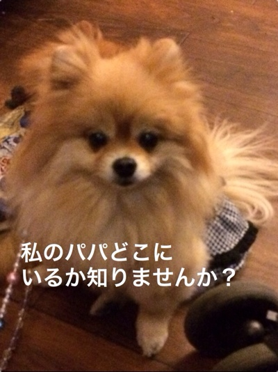 fc2blog_201403201902088d7.jpg