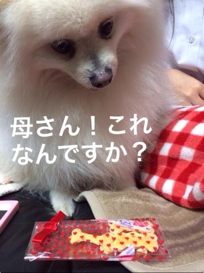 fc2blog_20140323183311d98.jpg