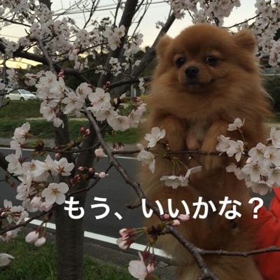 fc2blog_20140401114531535.jpg