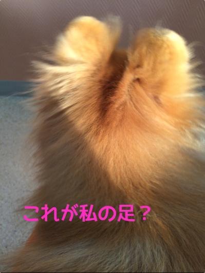 fc2blog_20140423204715141.jpg