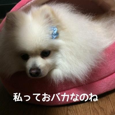 fc2blog_20140425184611df6.jpg