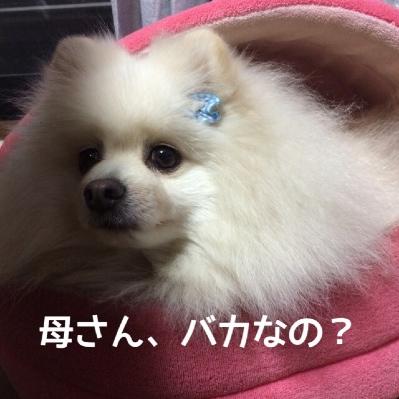 fc2blog_2014042518464418e.jpg