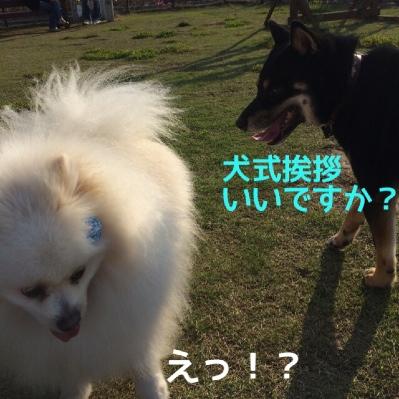 fc2blog_2014042718073860f.jpg