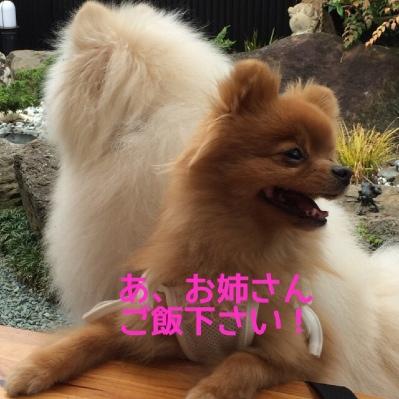 fc2blog_201405022059194e5.jpg