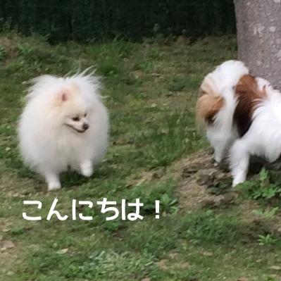 fc2blog_201405052229400ca.jpg