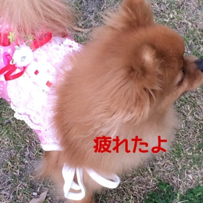 fc2blog_20140505223043438.jpg