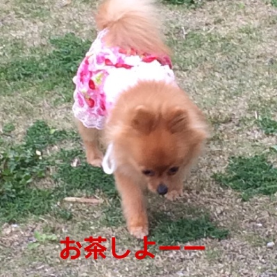 fc2blog_20140505223422776.jpg