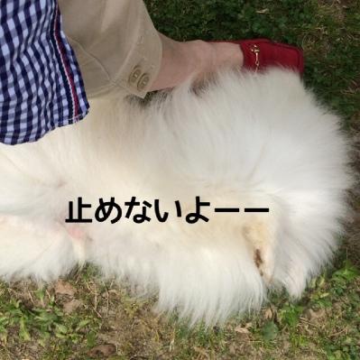 fc2blog_201405072042209e6.jpg