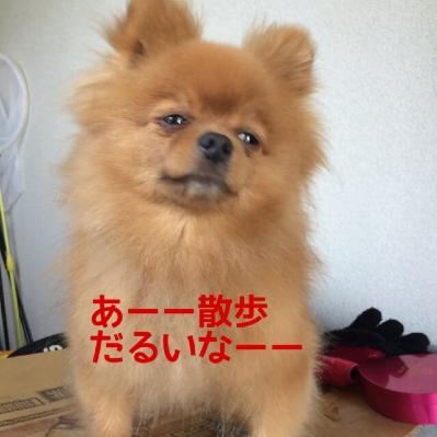 fc2blog_20140514215121b5d.jpg