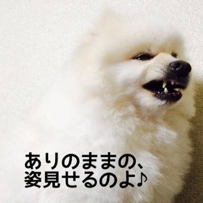 fc2blog_201405162207103d2.jpg
