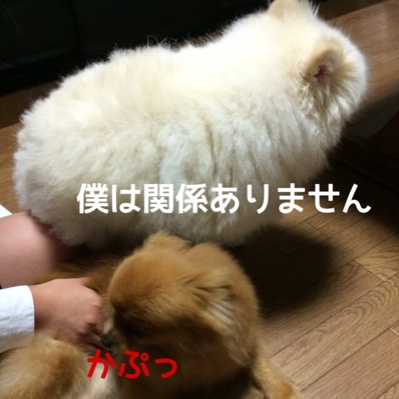fc2blog_2014061222033108f.jpg
