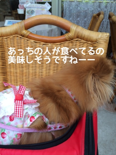 fc2blog_2014061719315620c.jpg