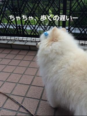 fc2blog_20140703204601ac5.jpg