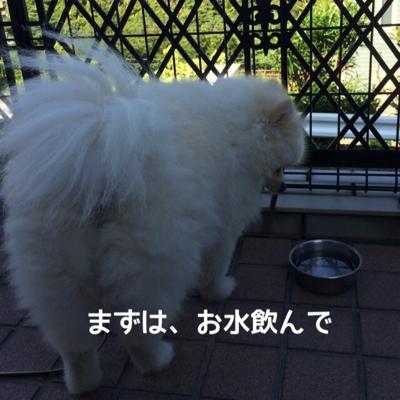 fc2blog_201407062036158c1.jpg