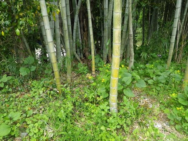隣接する竹林