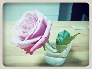 Sl_rose_01.png