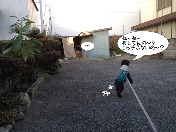 20141116210550ffd.jpg
