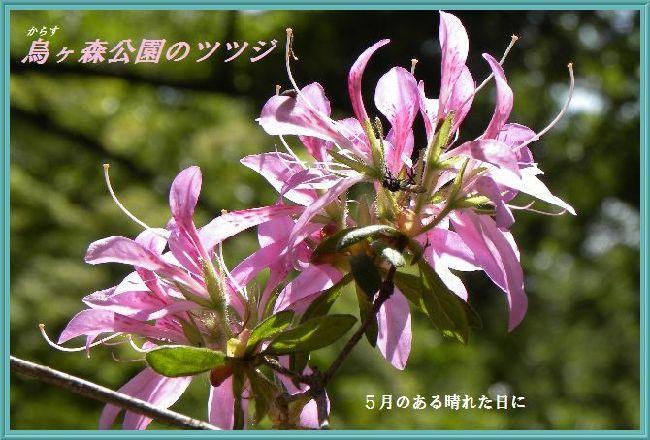 20140521232745e68.jpg