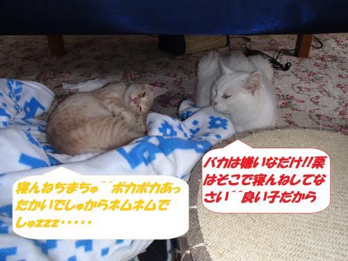 PA312322_convert_20141101142655.jpg